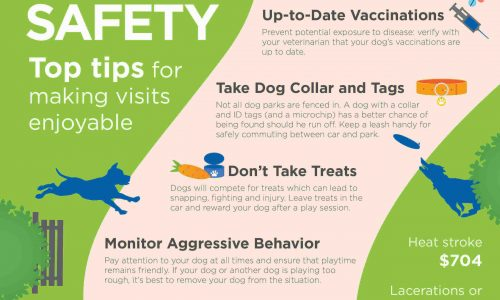 Top tips for walking your dog on the park