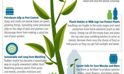 how to make your garden more environmentally friendly