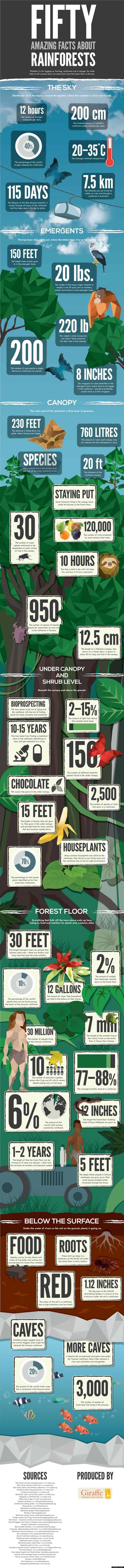 Facts about rainforests and why they are disappearing